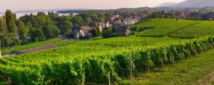 vignerons-de-la-vicomte-winzer-vorstellung-hero